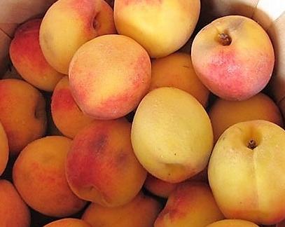 vineyard-peaches-1-1.jpg