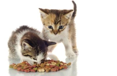 Cat-eating-kibble.png