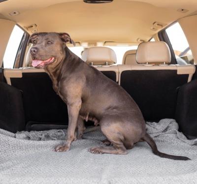 smiley-dog-staying-car-trunk-5.jpg
